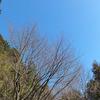 残雪の山々 〜荒神山から〜