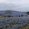 ひたち海浜公園のネモフィラと大洗磯前神社・西福寺への参拝