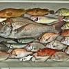 日本海で五目釣りを楽しんできました🎵  【  SLJ&エサ釣り&インチク&ふわふわ大作戦 】