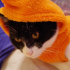 今日の黒猫モモ&白黒猫ナナの動画ー622