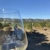 【ノムリエstudy.14】ワインを美味しくするのは料理だけではない。【ワインメモ】