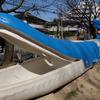 神田川沿いのお散歩