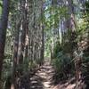 京大坂道と町石道、まとめてお相手して進ぜよう (3)