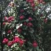 バラ栽培講座(8) バラの害虫対策