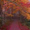 京都・南丹 - 霧に包まれる紅葉の龍穏寺