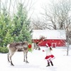 今年も残すところあと2週間!クリスマスに紅白歌合戦、除夜の鐘が鳴れば新年だ!