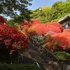 等覚院(川崎市) ~市街地のほど近くに建つツツジ咲き誇る花の寺~