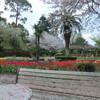 監物台植物園の桜と花々