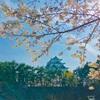 桜めいっぱい『木ヶ崎公園・名城公園・名古屋城・志賀公園』