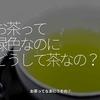 1000食目「お茶って緑色なのにどうして茶なの?」お茶ってなあに?その①