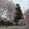 近所の桜たち