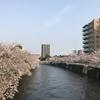 【品川区】目黒川周辺の桜を見ながらお散歩