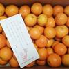 蔵光農園 極早生みかん  和歌山日高川町 柑橘類生産農家