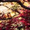 大きなイチョウの木と沢山の紅葉が見られる、秋の北鎌倉・浄智寺に訪れてみた
