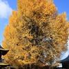 飛騨の秋景色 【国分寺】