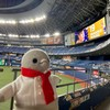 今年はじめての野球観戦!コペンギンは不服のようです(京セラドーム大阪編その1)(430)