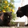 先住猫がいて猫を拾ってしまった場合の注意点は?