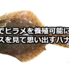 「自宅でヒラメを養殖可能に?」のニュースを見て思い出すハナシ