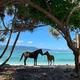海と馬車と自転車の楽園「ギリ・トラワンガン島」(2019年)