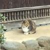 おさんぽ庭園@横浜ベイサイド(下)