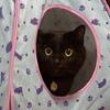 写真映えしない黒猫