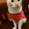 猫白血病 感染経路を探る。まさか、動物病院⁈ 【インフルエンザ流行中】