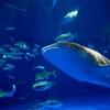 そうだ鹿児島にいこう[水族館編]ー雨の日でも、一人でも、楽しめる!