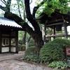 勝手に紅葉レポート【品川駅チカ日本庭園】