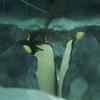 日本の動物園・水族館で見られるペンギン