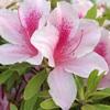 熱いバトル野郎とお花という取り合わせはひと言で言うなら美とちからのパフォーマンス