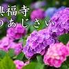 興福寺(長崎市)のあじさい2018!開花・見頃とみどころ、観光アクセス情報