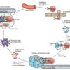 腫瘍と免疫の相互作用
