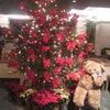 クリスマスソング♪♪