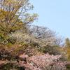 春の野山にて