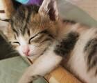 リフレぐっすりずむ睡眠サプリメント!不眠の悩み、睡眠の質の向上に!