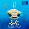 ふれあい科学館 冬季特別企画展「ふぐ展」12月18日から開催!