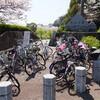 長山公園の桜:その壱