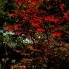 中国で秋の写真撮影、高速鉄道で南京旅行(1)栖霞山、紅葉谷