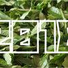 【2018年】「茶(生葉)の収穫量」ランキング