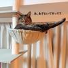 猫は「天然のかわいさ」と「あざといかわいさ」を併せ持つ説