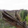 オーストラリア シドニーから世界遺産【エアーズロック】へ車で行った話 その②(②/⑦) アデレードの動物園とハンドーフ