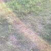 芝生が心配