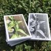 折本フェアmini参加折本『夏のみどりを愛でる』の配信をスタートしました(終了しました)