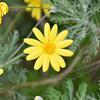 長く咲く花