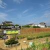 神原町花の会(花美原会)(251)   花摘みが楽しめるポピー畑