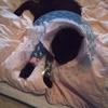 扁平上皮癌になった愛猫を、天にお返しした④