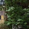 春の陽気に誘われ樹木公園へ・・