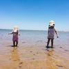 【1歳と3歳育児】Wellington Pointの砂浜、IKEAのスモーランド(Smaland)を初めて利用してみた