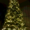 クリスマスを香港で過ごしました