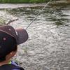 旭川市、辺別川でニジマス釣り、ピンクバッタも見つけたよ!